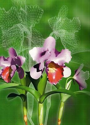 Hóa chất Duchefa, hóa chất nuôi cấy mô thực vật và môi trường vi sinh
