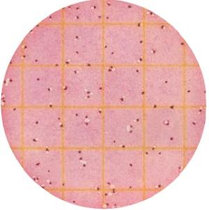a-Petrifilm-kiểm-Coliforms