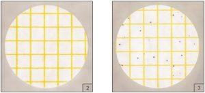 Kết quả kiểm tụ cầu vàng Staphylococcus coagulase