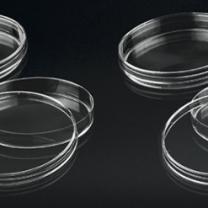 Đĩa petri nhựa polystyrene tiệt trùng
